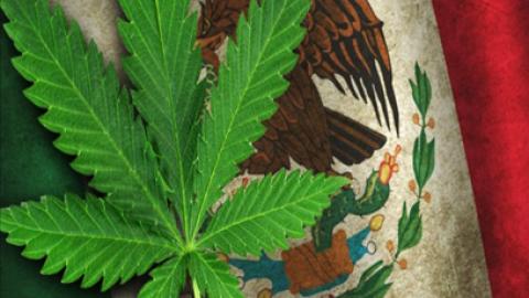 MARIHUANA W MEKSYKU LEGALNA JESZCZE LUTYM