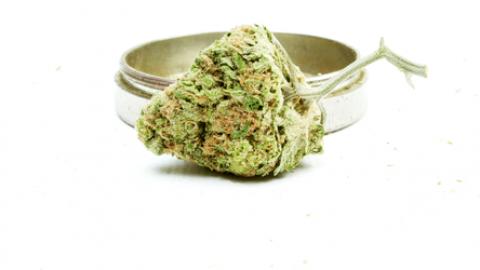 Czy marihuana może zatrzymać uzależnienie od leków przeciwbólowych?