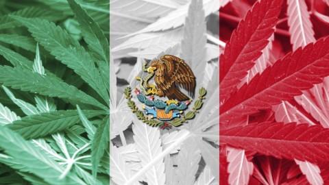LEGALIZACJA W MEKSYKU STAJE SIĘ FAKTEM! SĄD NAJWYŻSZY STWIERDZIŁ, ŻE ZAKAZ UŻYWANIA MARIHUANY JEST NIEKONSTYTUCYJNY.