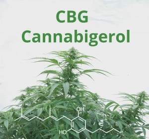 kannabigerol CBG