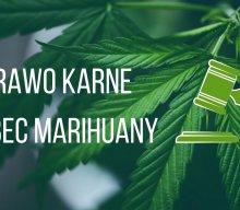 O prawie karnym wobec marihuany.