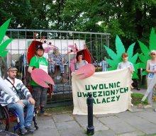 2,5 roku dla pacjenta leczącego się marihuaną!