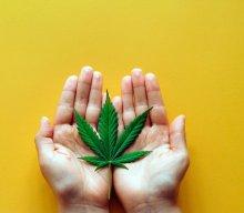 Sondaż Kantaru! Wyborcy PIS i PO nie chcą kar za używanie marihuany