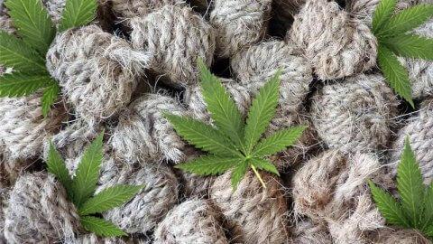 Lista opisowa odmian roślin rolniczych – rośliny oleiste i włókniste