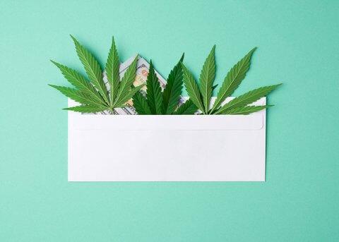 Wpływ legalizacji marihuany w Polsce