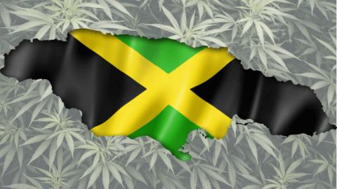 Liściem po mapie, czyli konopie na Jamajce